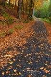 Forest Path With A Tree Royalty Free Stock Photos
