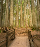 Forest path with wooden bridge in the morning Royalty Free Stock Photos
