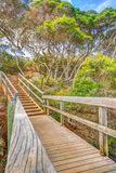 Forest path in Eden Australia Stock Photos