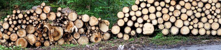 Forest path with woodpile. Panorama view of a forest path with woodpile Royalty Free Stock Photo