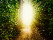 Forest Path. In the woods Stock Image