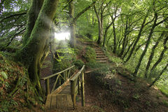 Forest paths, England royalty free stock image
