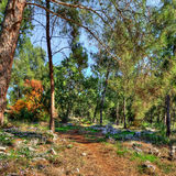 Forest  paths Royalty Free Stock Image