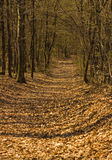 Forest paths, long shadows. Stock Image
