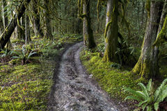 Forest Paths. A path meanders through the rainforest in the Fraser Valley, BC, Canada Stock Photo