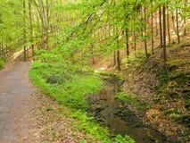 Forest paths. Saxon Switzerland, Germany Stock Photos