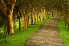 Forest pathway Royalty Free Stock Image
