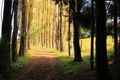 Forest pathway. Tree lined pathway in the forest Stock Photography