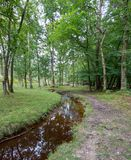 Forest pathway alongside a stream. Wooded forest pathway alongside a forest stream with silver birch trees Royalty Free Stock Images