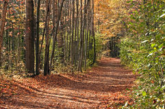 Forest pathway in autumn Royalty Free Stock Image