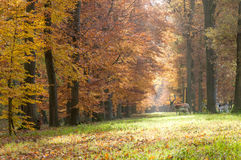 Forest pathway in the autumn Royalty Free Stock Images