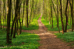 Forest pathway in blossoming green woods at sunset Stock Photo