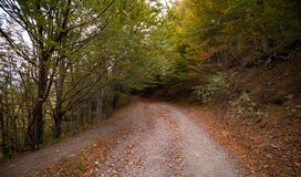 Forest Pathway during Daytime Royalty Free Stock Photography