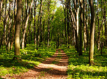Forest pathway in green woods at sunset Stock Photos