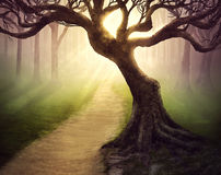 Forest pathway stock photography