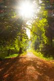Forest pathway in morning sunshine stock photo