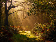 Forest pathway. Forest path derbyshire in  the autumn time stock photo