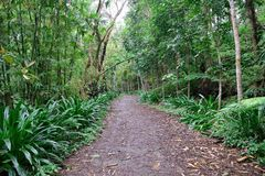 Forest pathway. A photo of a pathway in the forests  of quezon province Philippines Royalty Free Stock Images
