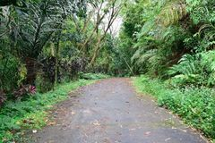 Forest pathway. A photo of a pathway in the forests  of quezon province Philippines Royalty Free Stock Photos