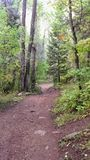 Rocky Mountain Forest Path Way Royalty Free Stock Photo
