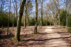Forest pathway. A pathway in a forest setting, surrounded by bare trees Royalty Free Stock Image