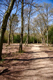 Forest pathway. A pathway in a forest setting, surrounded by bare trees, vertical Stock Photo