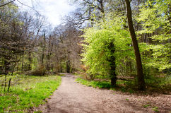 Forest pathway. A pathway in a forest setting, surrounded by trees and forestation Stock Image