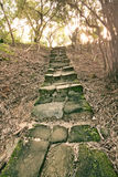 Forest pathway with stairs Royalty Free Stock Photo