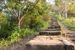 Forest pathway with stairs Royalty Free Stock Image