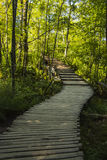 Forest pathway in the sunshine Royalty Free Stock Image