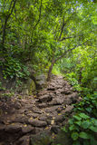 Forest pathway through thick woods. Green rocky path through Hawaiian mountains Royalty Free Stock Image