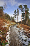 Forest pathway, Thirlmere, Cumbria stock photos