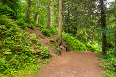 Forest pathway. The very gorgeous ancient English woodlands of Leigh Woods Stock Image