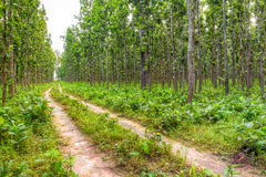 Forest pathway Royalty Free Stock Images