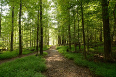 Forest Pathways Royaltyfria Bilder