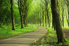 Forest pavement under the trees. Landscape view of a built road under the shade of trees in the spring forest Stock Photography