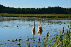 Forest peat lake royalty free stock photo