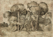 Forest. Pencil sketch on old paper. Vintage picture. Royalty Free Stock Photography