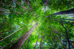 Forest. This photo was shot at Kota Tinggi of Malaysia Stock Photography