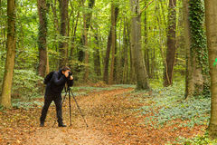 Forest photographer Stock Photography