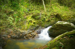 Forest photography, mountain river with waterfall Royalty Free Stock Photos