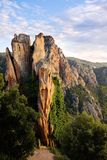 The forest of Piana (Corsica) Stock Images