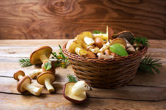 Forest picking edible mushrooms in wicker basket on wooden backg Royalty Free Stock Photography