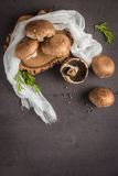 Forest picking mushrooms Royalty Free Stock Photos