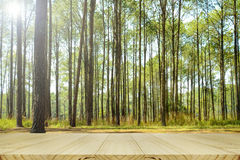Forest picnic background. Stock Images