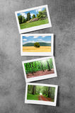 Forest on the picture frames Stock Images