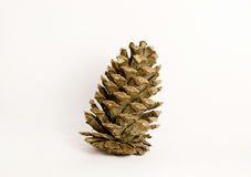 Forest pine cone. On the white background Stock Image