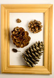 Forest pine cone. In the wood frame Royalty Free Stock Photo