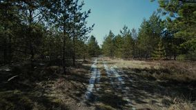 Forest pine road tree, winter, spring pine, fog, landscape, summer, green, sun, travel, scene, leaf. Forest pine road light, morning, plant, rural, sunlight stock footage