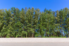 Forest pine tree wall fence on the sea beach with blue sky Stock Photos
